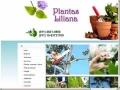 Plantas Liliana